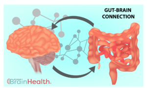The bidirectional pathway between the brain and the gut